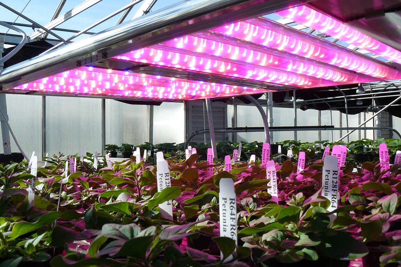 lighting_horticulture_LEDs_spectral_sensor_technology_dam-499395_1390x956